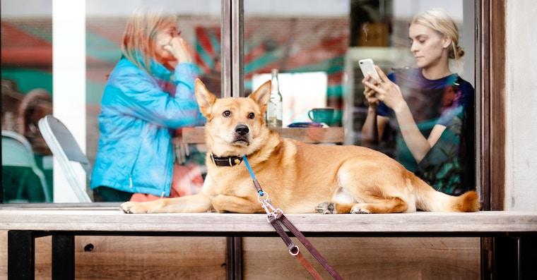 Dog iPhone fb