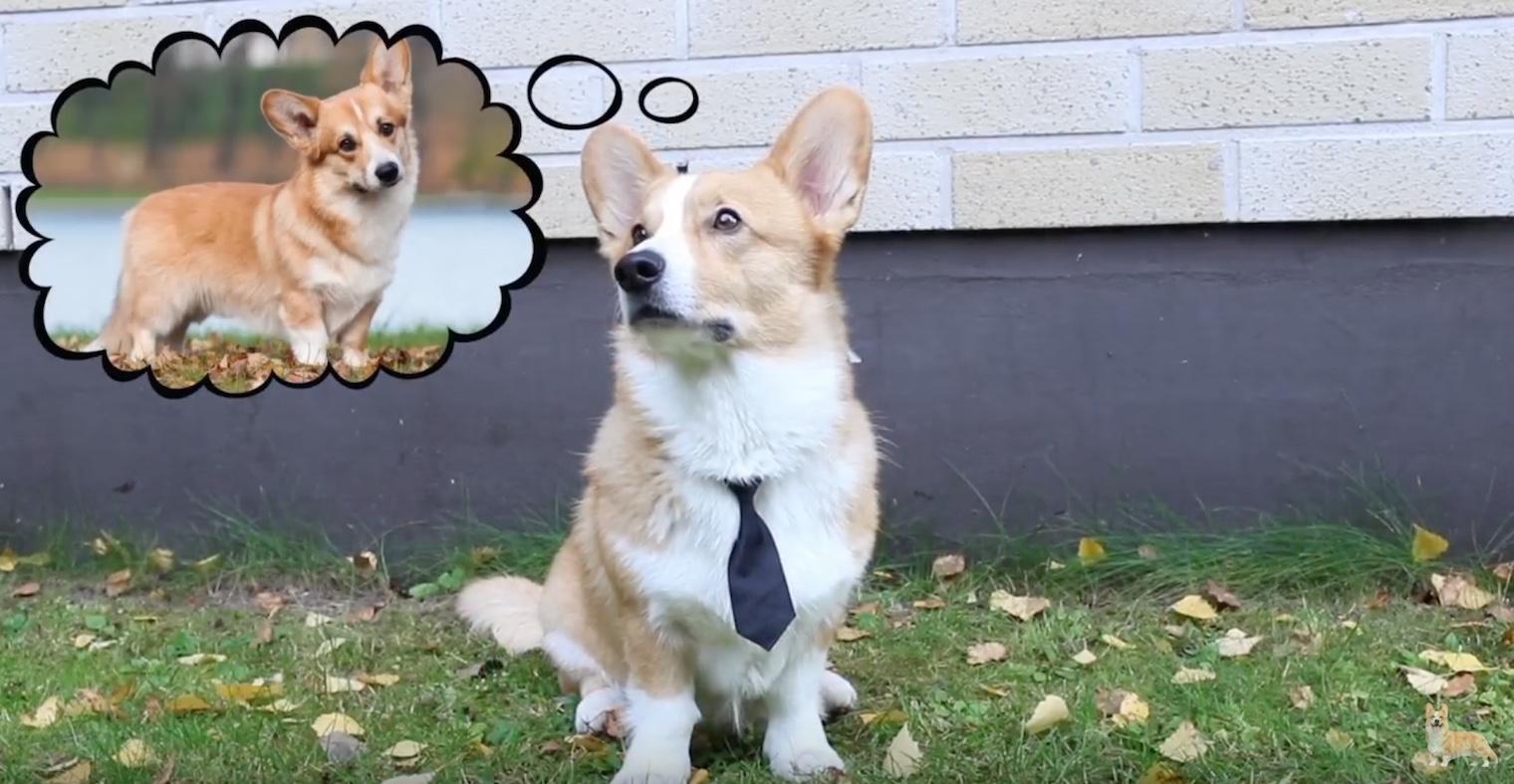 psi na tinderu