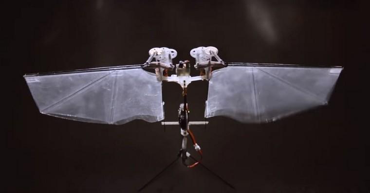 hmyz fb